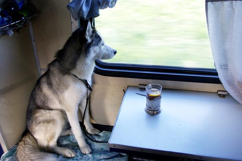собака поезд