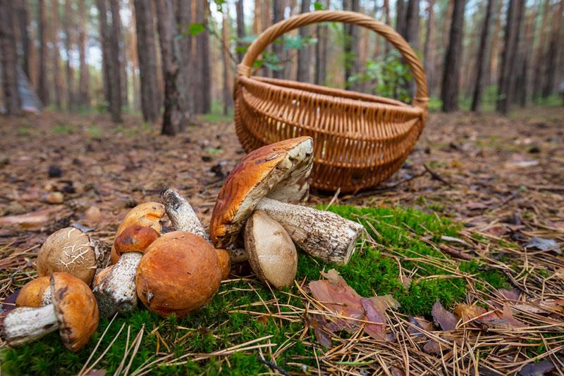 На Запоріжжі через отруєння грибами жінка потрапила до реанімації