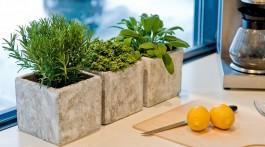 6 причин вирощувати овочі та зелень на підвіконні