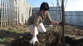 Садимо_дерева