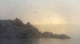 На запорізькій Хортиці мешкають червонокнижні птахи