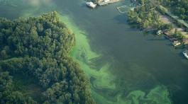Синьо-зелені водорості здатні зіпсувати питну воду в Запоріжжі