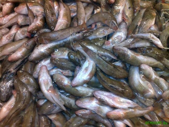 1-рыба-бычки-рыбак-ловить