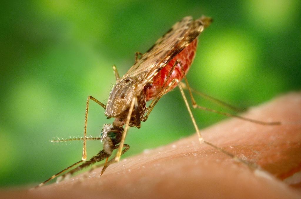 malyariinui-komar