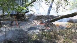 горел лес