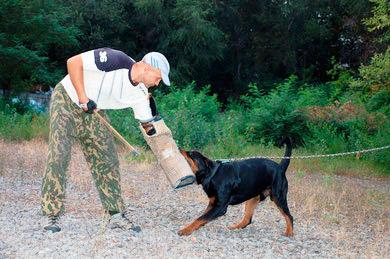 Фото 6_Валерий Федорович работает инструктором служебного собаководства на одном из предприятий Запорожья
