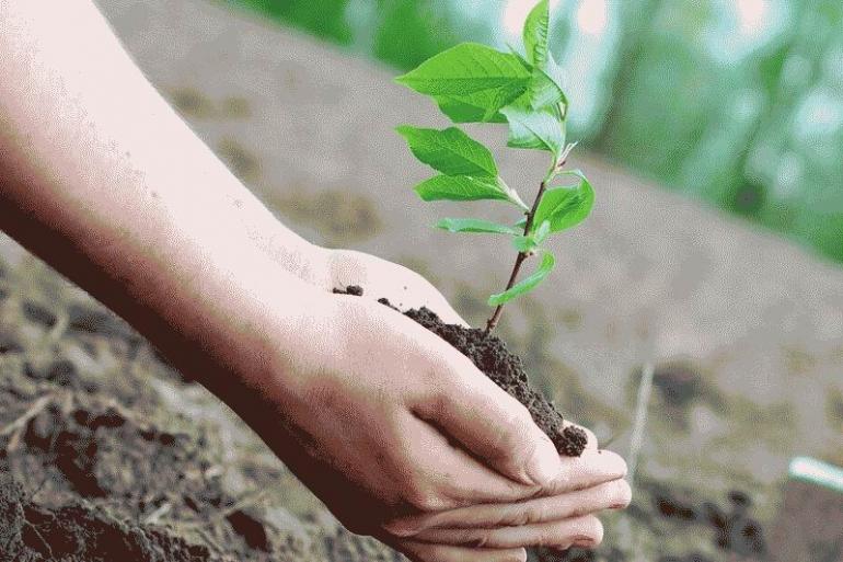 Запоріжців запрошують посадити іменне дерево