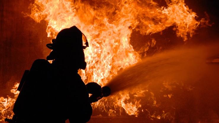 Під час пожежі на запорізькій фермі згоріло майже дві сотні поросят