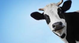 Запорізькі рятувальники діставали корову із двохметрової ями