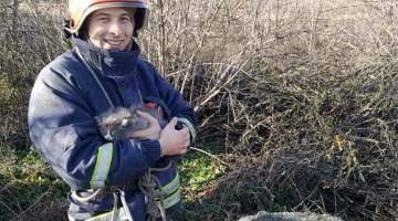 У Запорізькій області кошенят викинули в колодязь