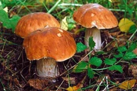 У Запорізькій області жінка отруїлася грибами