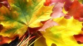 5 цікавих та корисних ідей з опалим листям