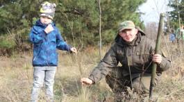 У Запоріжжі на Хортиці висадили алею дубів та сосен