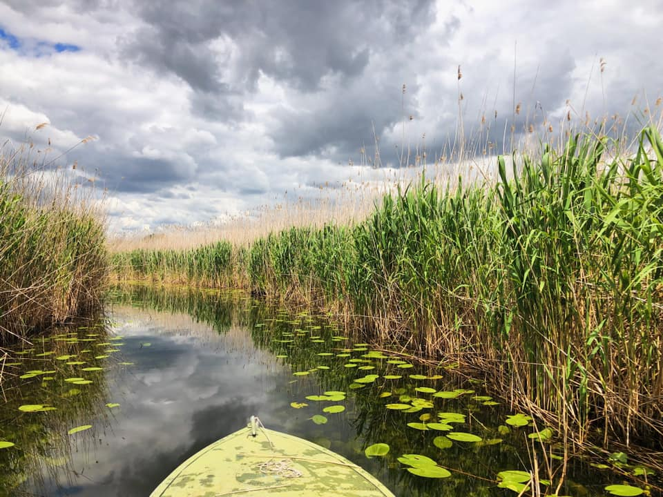 Дніпровські плавні