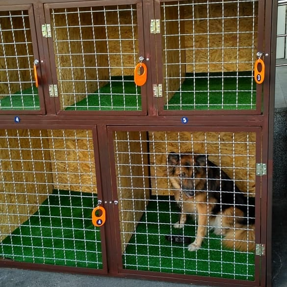 камери схову для собак на Київщині