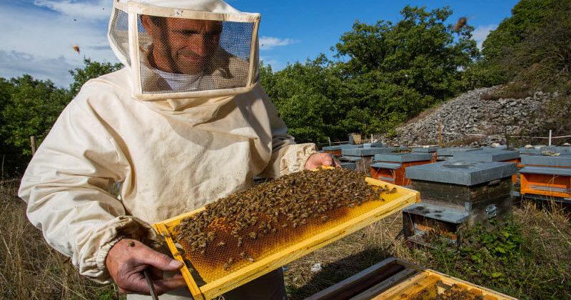Бджоляр з Івано-Франківщини