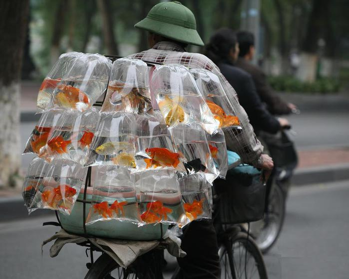 в_етнам