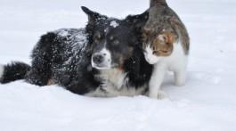 dog-1755423_1280-850x500